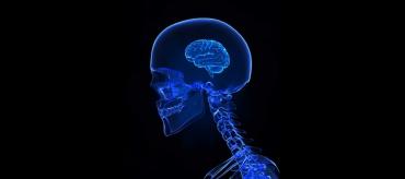 idiot-cerveau-brain.jpg